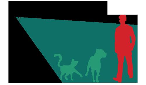 Pet Immunity